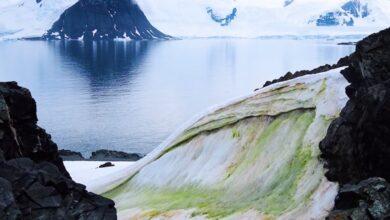Photo of La Antártida se cubre de 'nieve verde' por cambio climático.