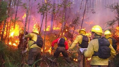 Photo of El combate a incendios forestales no se detendrá durante emergencia sanitaria.