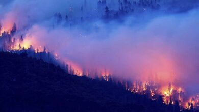 Photo of Trump anuncia visita a California para evaluar incendios