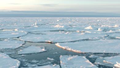 Photo of La banquisa del Ártico, en riesgo de desaparecer en verano, alertan